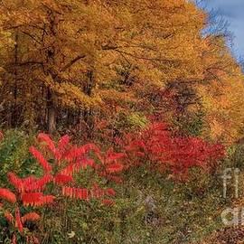 Henry Kowalski - Autumn Railroad