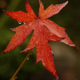 Inge Riis McDonald - Autumn Rain