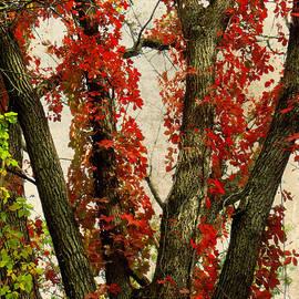 Shawna  Rowe - Autumn Red