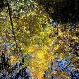 Karen  Majkrzak - Autumn Reflection on a Stream