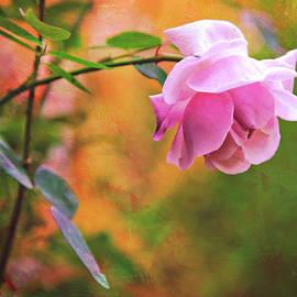 Theresa Tahara - Autumn Rose