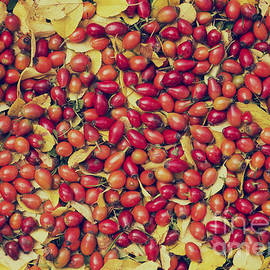 Tim Gainey - Autumn Rosehips