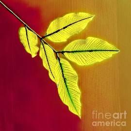 Autumn Rustle