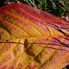 Sonali Gangane - Autumn Saga
