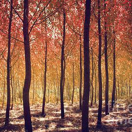Carlos Caetano - Autumn Scenic