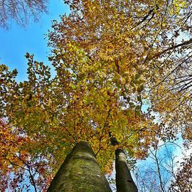 Chris Sotiriadis - Autumn Sky
