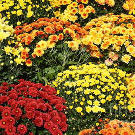 Photographic Art and Design by Dora Sofia Caputo - Autumn Splendor