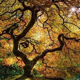 Vahid Samie - Autumn Splendor