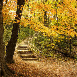 Scott Norris - Autumn Stairs