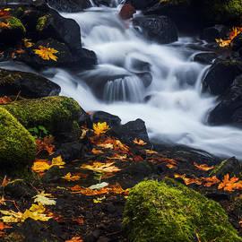 Vishwanath Bhat - Autumn stream