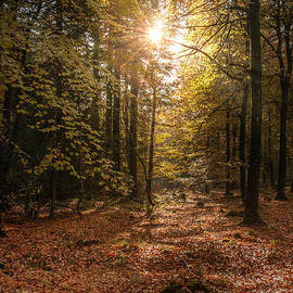 David Tinsley - Autumn Sunrise