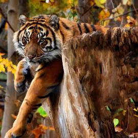 Elaine Manley - Autumn Tiger