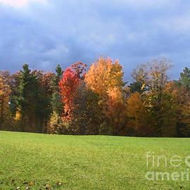 Conni Schaftenaar Elderberry Blossom Art - Autumn Trees Dry Brush