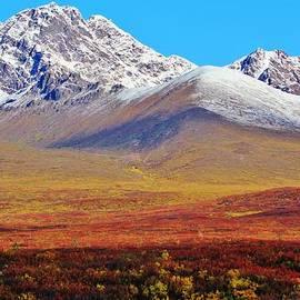 David Broome - Autumn Tundra