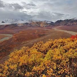 David Broome - Autumn Tundra Vista