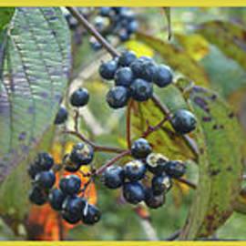 Mother Nature - Autumn Viburnum Berries Series - A Trilogy