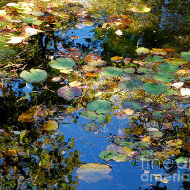 Nancy Mueller - Autumn Water Lily Reflections