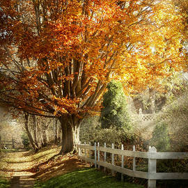 Mike Savad - Autumn - Westfield NJ - I love autumn