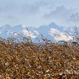 Janice Rae Pariza - Autumn Wheat Heat Lightning