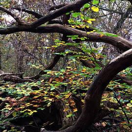 Colette V Hera  Guggenheim  - Autumn Wild Nature Denmark