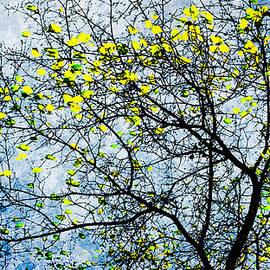 Alexander Senin - Autumn Winds