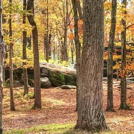 Heather Allen - Autumn Woods