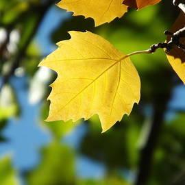 Lorna Hooper - Autumn Yellow