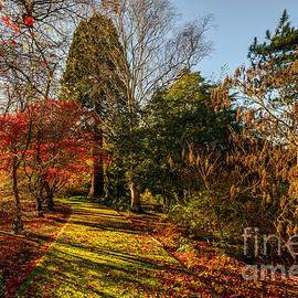 Adrian Evans - Autumnal Forest