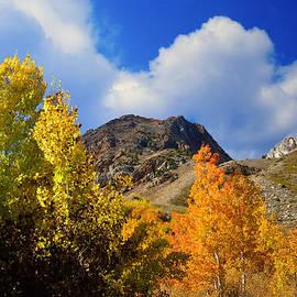 Lynn Bauer - Autumns Splendor