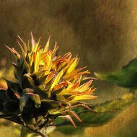 Susan Capuano - Autumns Touch