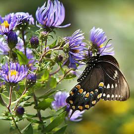 Christina Rollo - Butterfly Awakening