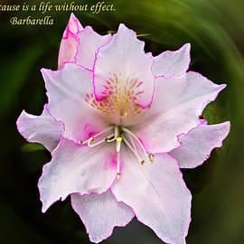 Michael Whitaker - Azalea Cause and Effect