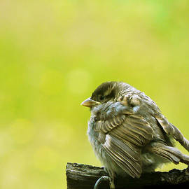 Pamela Patch - Baby Bird Waiting for Mommy
