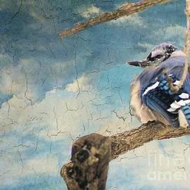 Janette Boyd - Baby Blue Jay in Winter