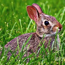 Elizabeth Winter - Baby Bunny