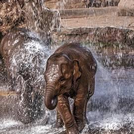 Mickey At Rawshutterbug - Baby Elephants Joy