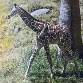 Jay Milo - Baby Giraffe Kubwa