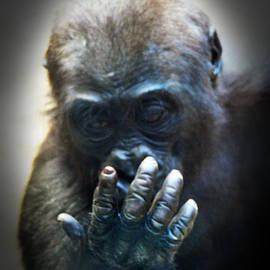 Jim Fitzpatrick - Baby Gorilla Studying His Hand
