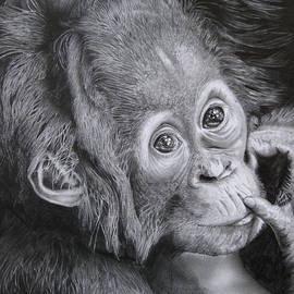 Giorgio  Smiroldo - Baby Orango