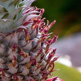 Denise Bird - Baby White Pineapple