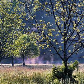 Carolyn Fletcher - Backlit Trees