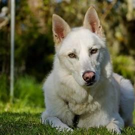 Tyra  OBryant - Backyard Dog Portrait 2