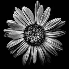 Brian Carson - Backyard Flowers In Black And White 13
