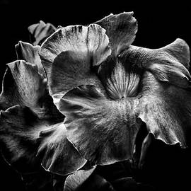 Brian Carson - Backyard Flowers In Black And White 2
