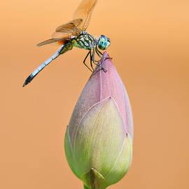 Carol Eade - Balance of Nature