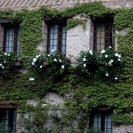 Ivete Basso - Balcony #1