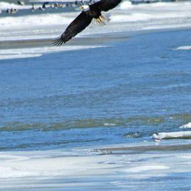 Jack Schultz - Bald Eagle 2832