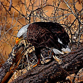 Ernie Echols - Bald Eagle Colorado Digital Art