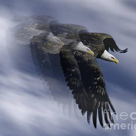 Ray G Foster - Bald Eagle Flight