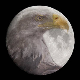 Chris Smith - Bald Eagle in the Full Moon